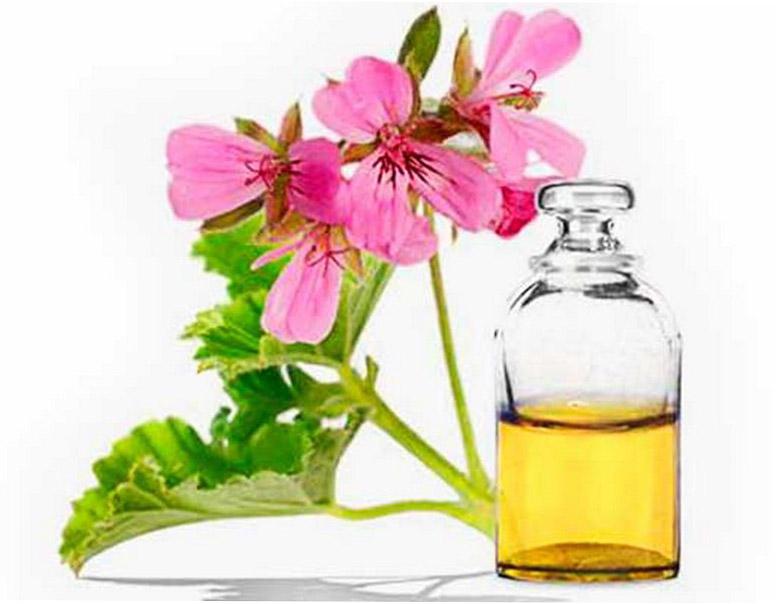 Эфирное масло герани: свойства и применение